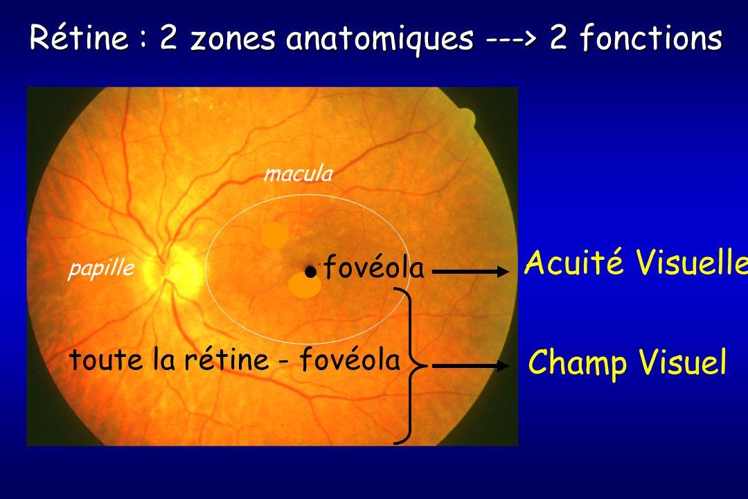 Rétine : 2 zones anatomiques ---> 2 fonctions