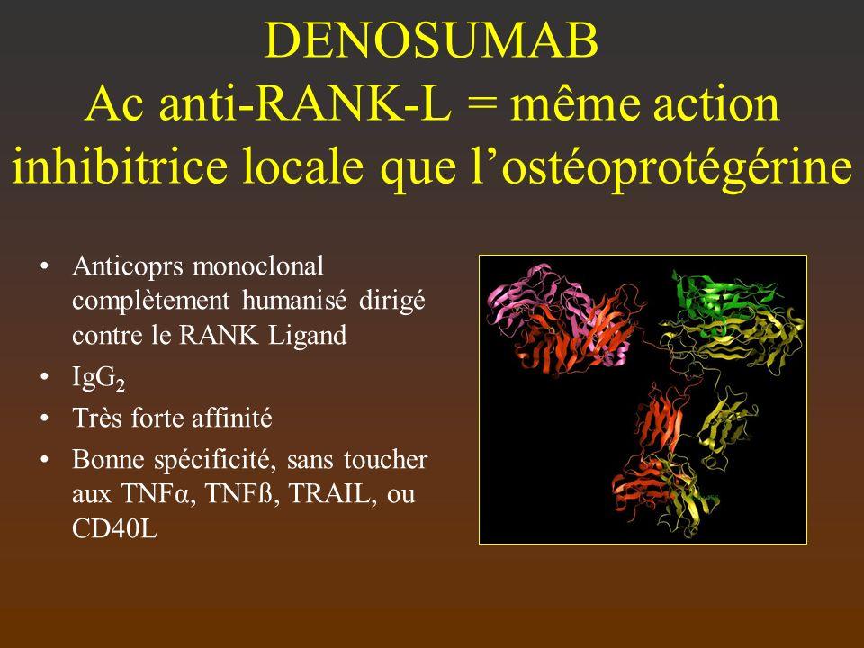 DENOSUMAB Ac anti-RANK-L = même action inhibitrice locale que l'ostéoprotégérine