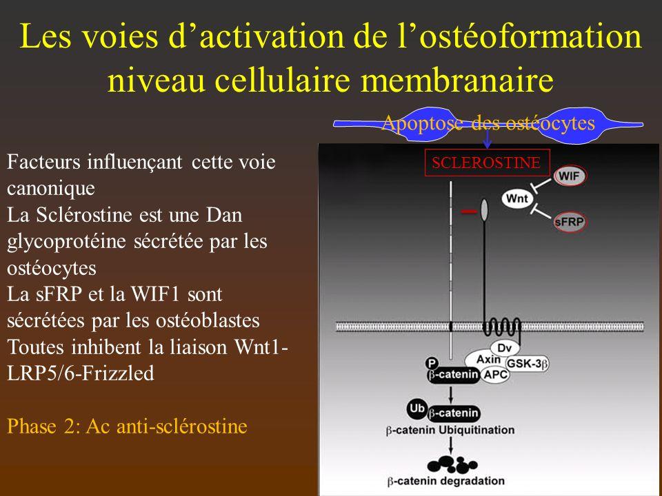 Apoptose des ostéocytes