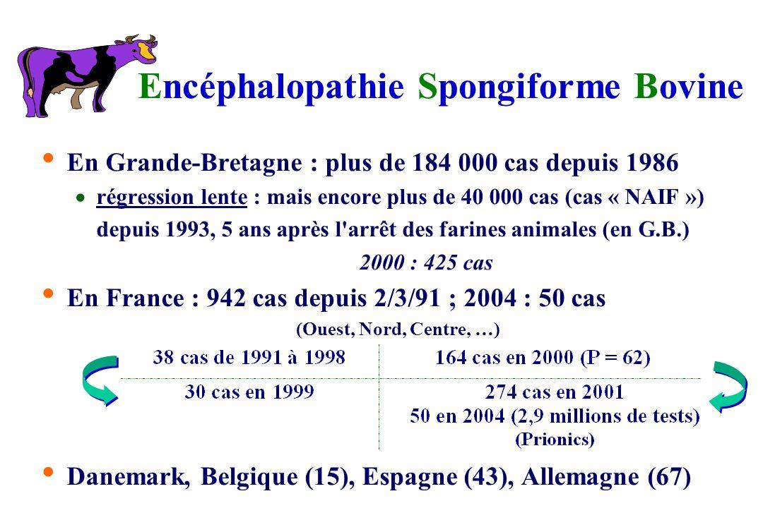 Encéphalopathie Spongiforme Bovine