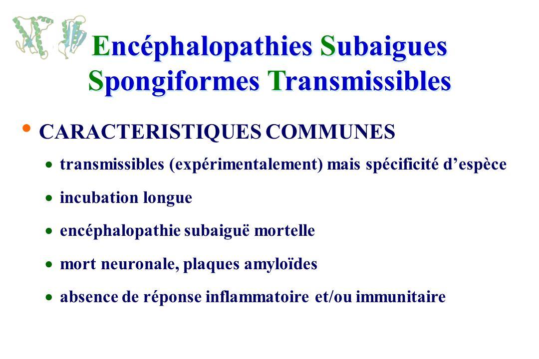 Encéphalopathies Subaigues Spongiformes Transmissibles