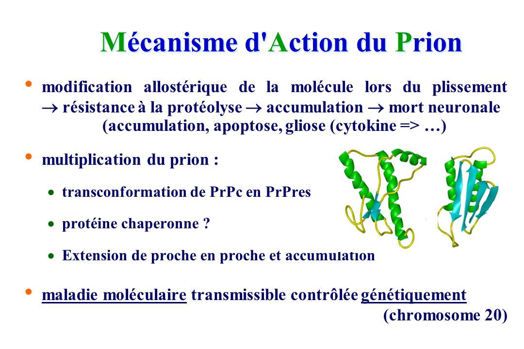 Mécanisme d Action du Prion