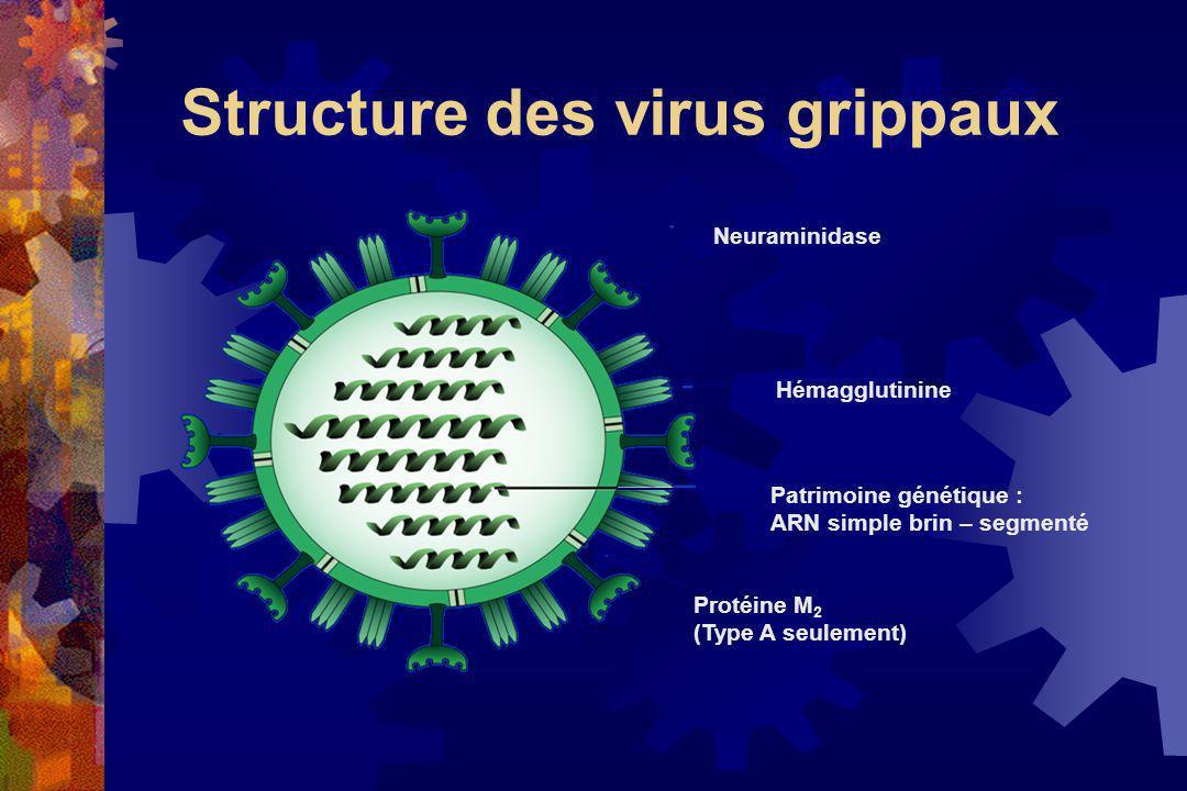 Structure des virus grippaux