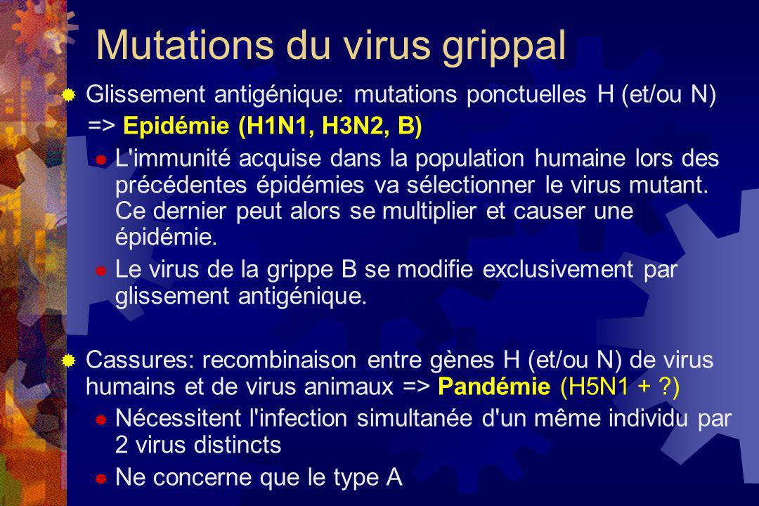 Mutations du virus grippal