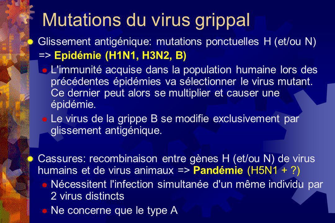 Mutations du virus grippal