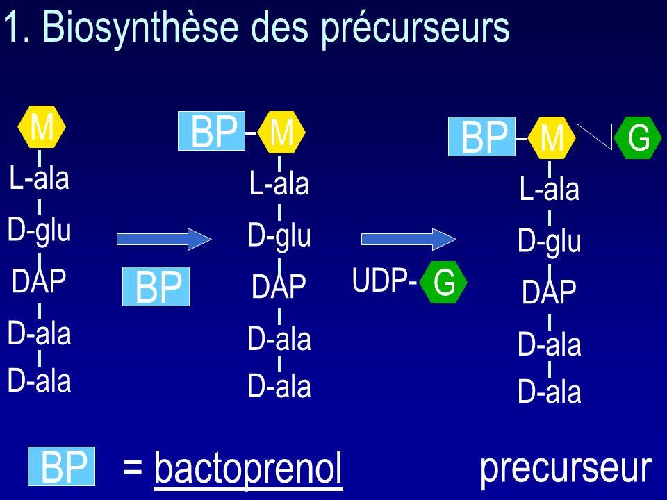 1. Biosynthèse des précurseurs