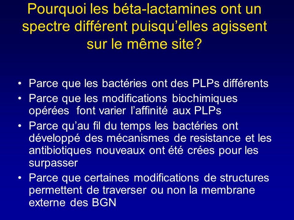 Pourquoi les béta-lactamines ont un spectre différent puisqu'elles agissent sur le même site