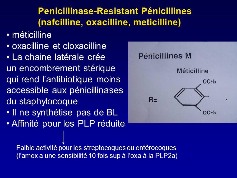 oxacilline et cloxacilline