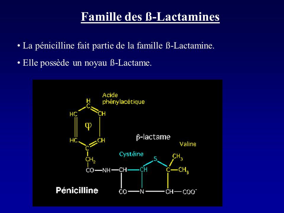 Famille des ß-Lactamines