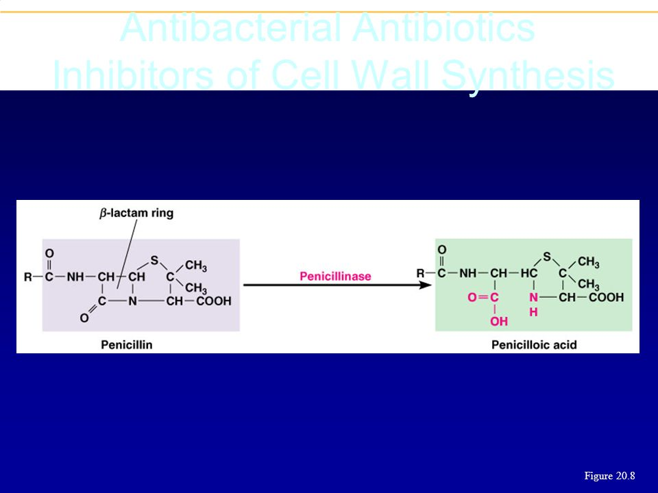 Antibacterial Antibiotics Inhibitors of Cell Wall Synthesis