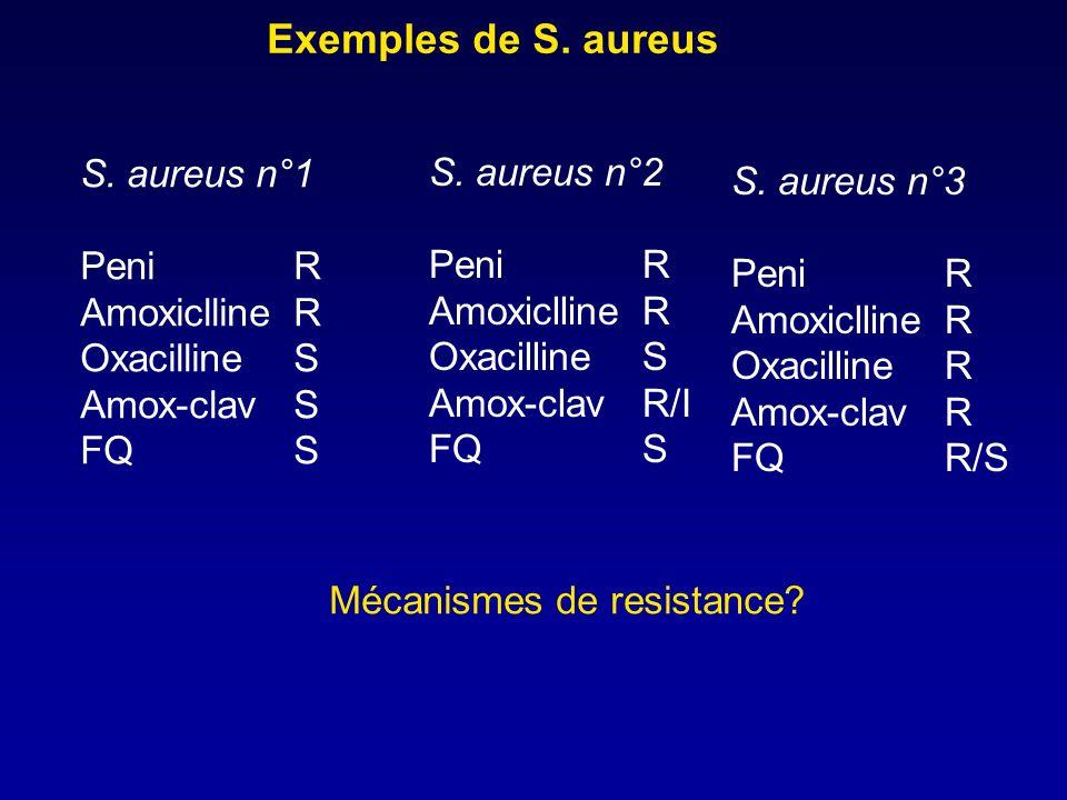 Exemples de S. aureus S. aureus n°1 S. aureus n°2 S. aureus n°3 Peni R