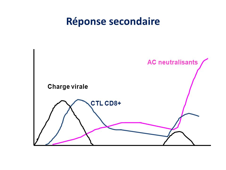 Réponse secondaire AC neutralisants Charge virale CTL CD8+