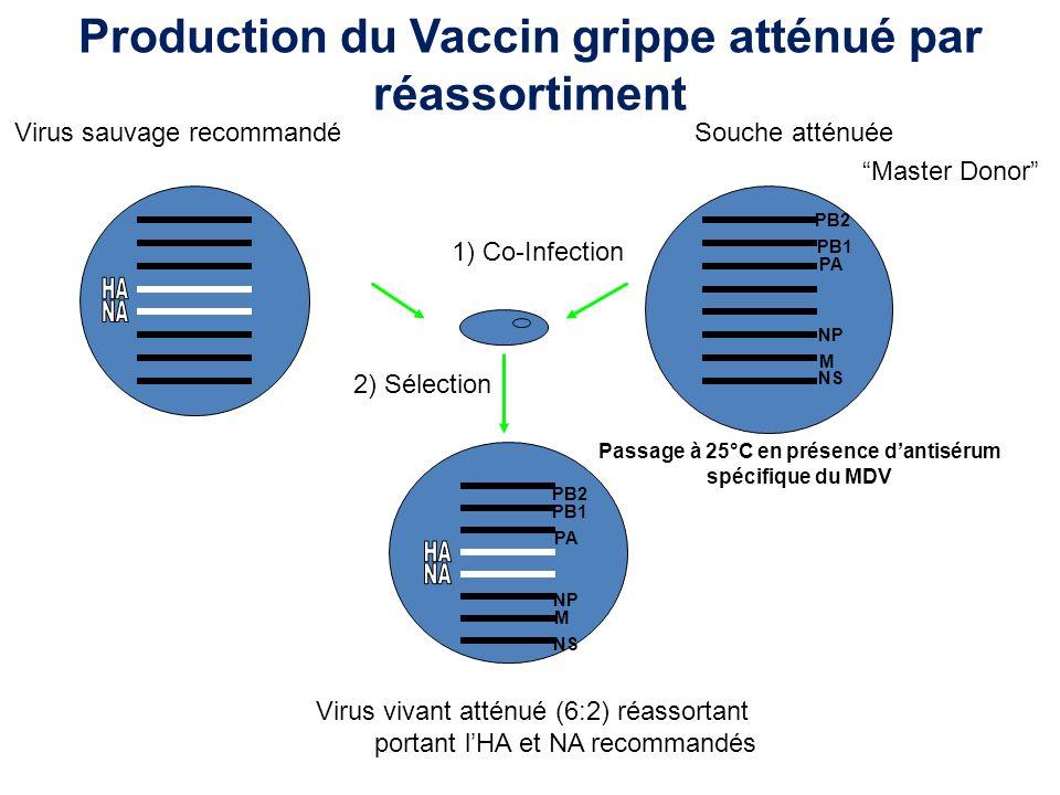 Production du Vaccin grippe atténué par réassortiment