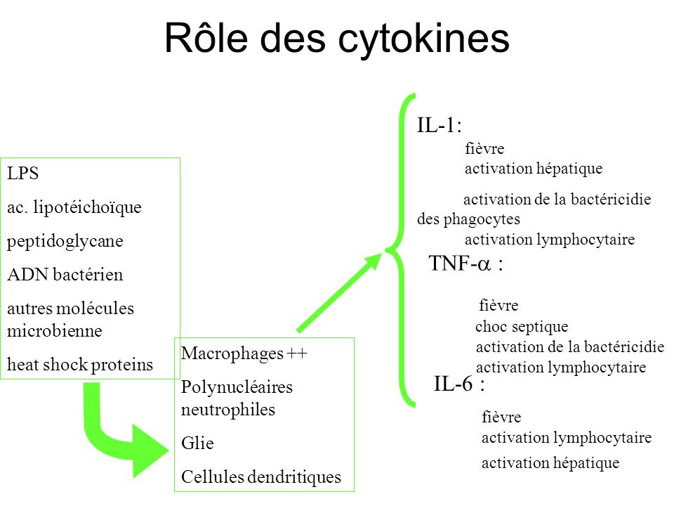 Rôle des cytokines IL-1: XXXXfièvre XXXXactivation hépatique TNF- :