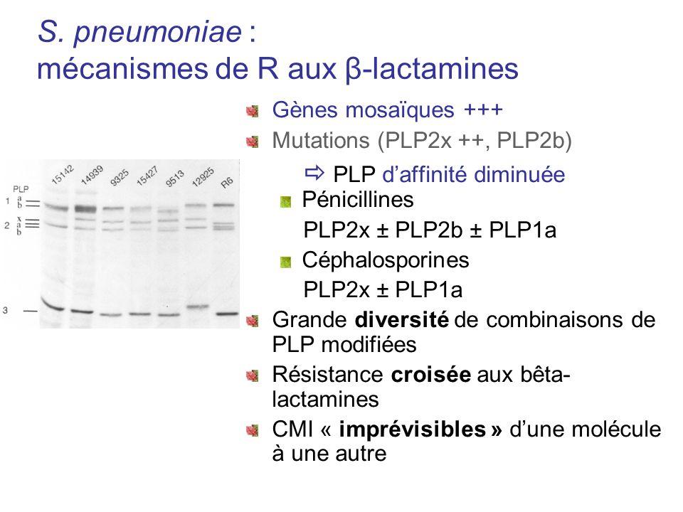S. pneumoniae : mécanismes de R aux β-lactamines