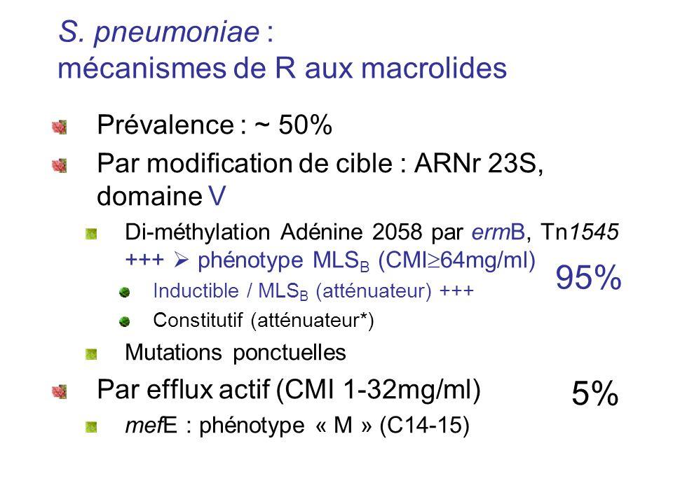 S. pneumoniae : mécanismes de R aux macrolides