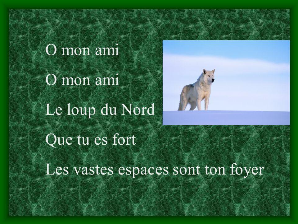 O mon ami Le loup du Nord Que tu es fort Les vastes espaces sont ton foyer