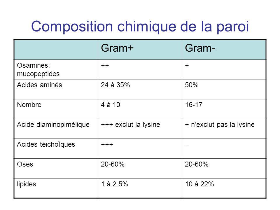 Composition chimique de la paroi