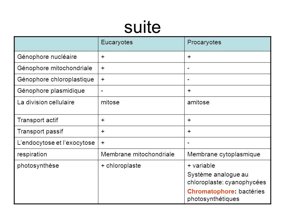 suite Eucaryotes Procaryotes Génophore nucléaire +
