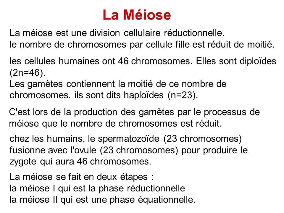 La Méiose La méiose est une division cellulaire réductionnelle.