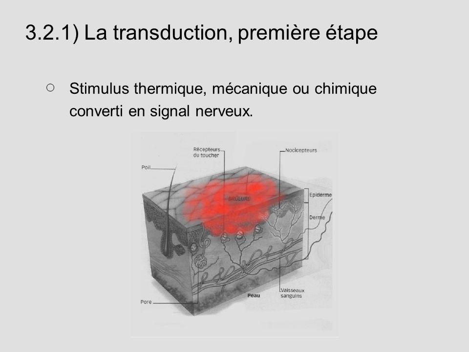 3.2.1) La transduction, première étape
