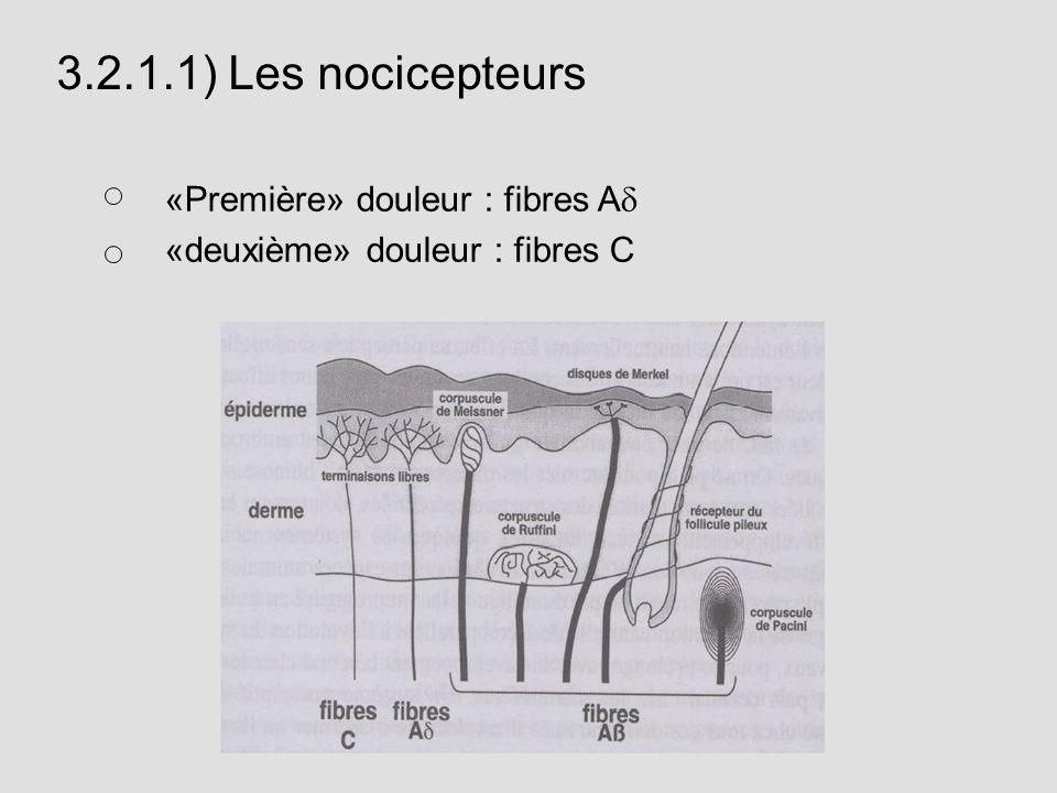3.2.1.1) Les nocicepteurs «Première» douleur : fibres Ad