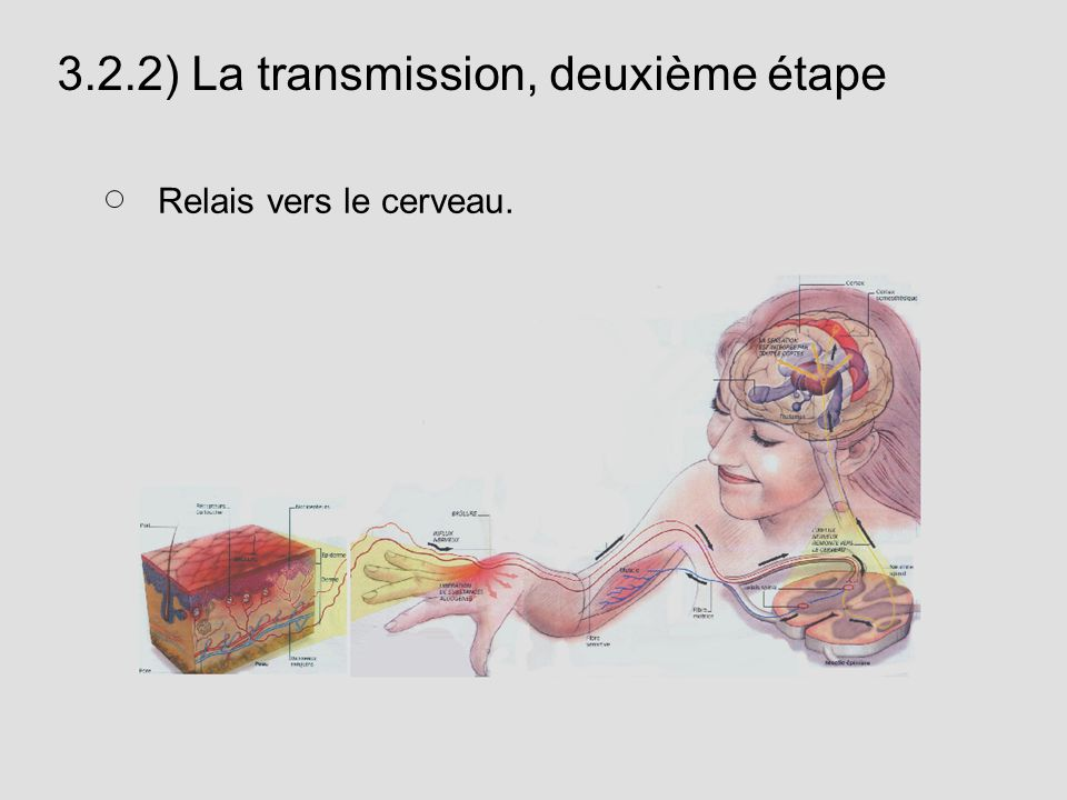3.2.2) La transmission, deuxième étape