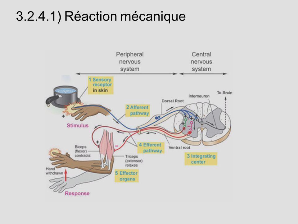 3.2.4.1) Réaction mécanique