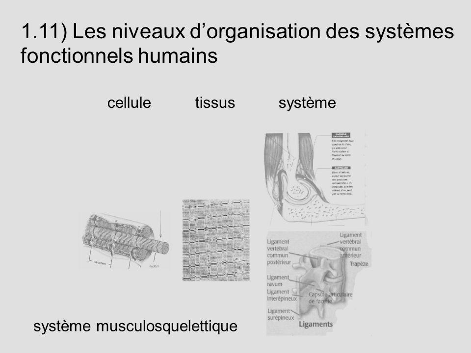1.11) Les niveaux d'organisation des systèmes fonctionnels humains