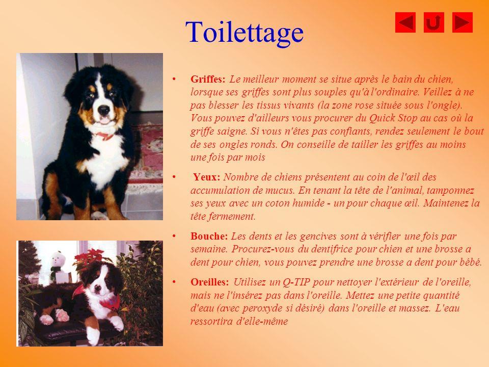 Toilettage