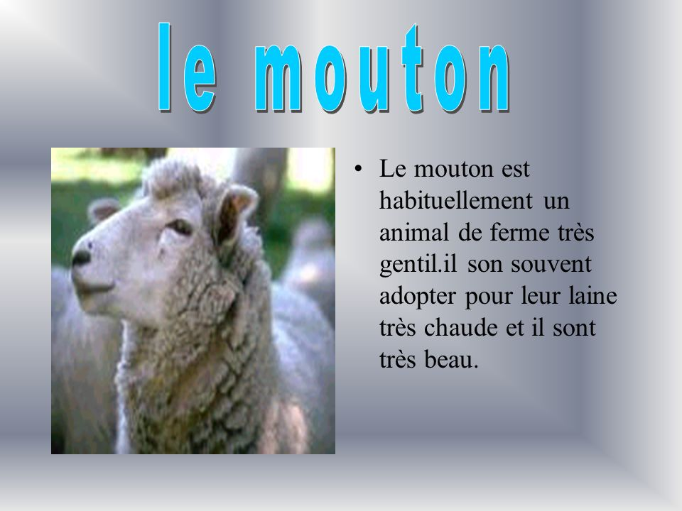 le mouton Le mouton est habituellement un animal de ferme très gentil.il son souvent adopter pour leur laine très chaude et il sont très beau.