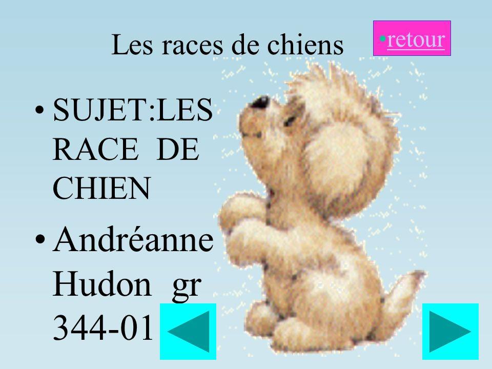 Andréanne Hudon gr 344-01 SUJET:LES RACE DE CHIEN Les races de chiens