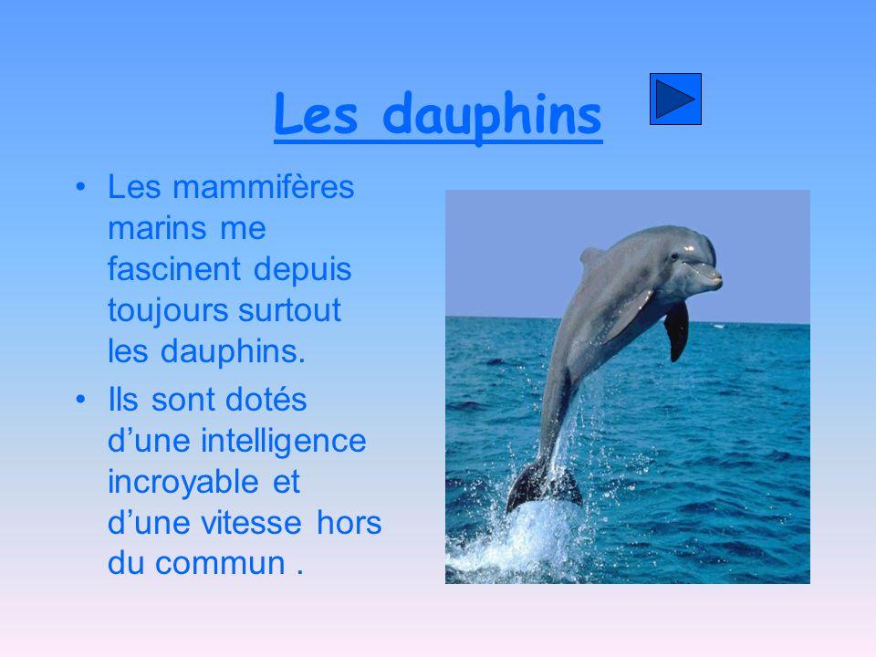 Les dauphinsLes mammifères marins me fascinent depuis toujours surtout les dauphins.