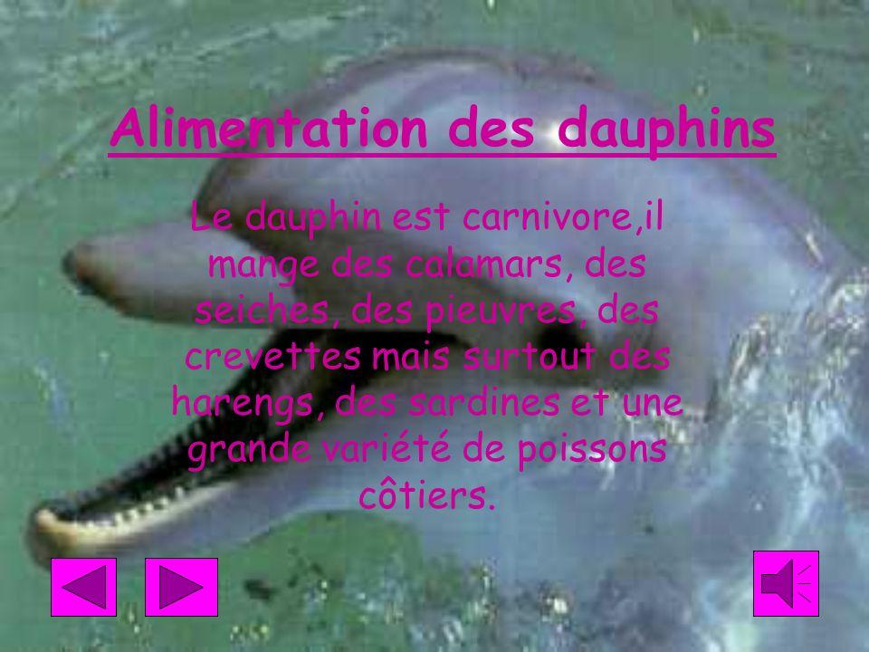 Alimentation des dauphins