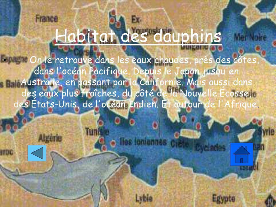 Habitat des dauphins