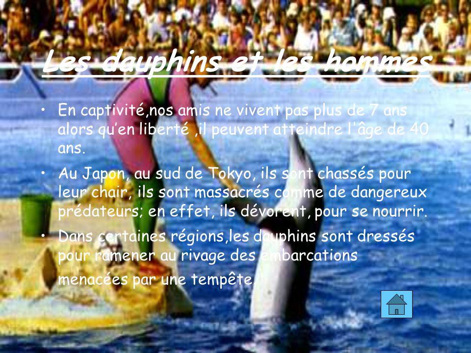 Les dauphins et les hommes