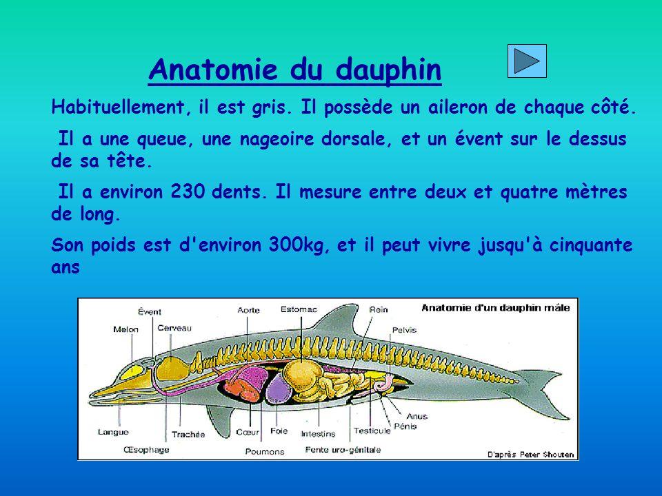 Anatomie du dauphinHabituellement, il est gris. Il possède un aileron de chaque côté.