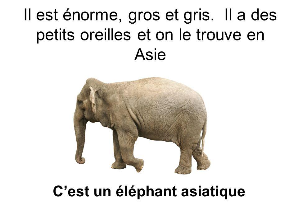 C'est un éléphant asiatique
