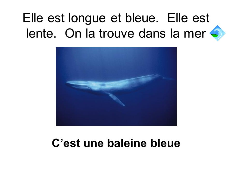 Elle est longue et bleue. Elle est lente. On la trouve dans la mer
