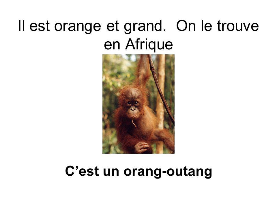Il est orange et grand. On le trouve en Afrique