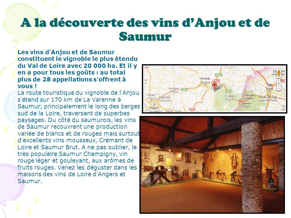 A la découverte des vins d'Anjou et de Saumur