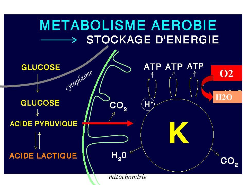 O2 cytoplasme H2O mitochondrie