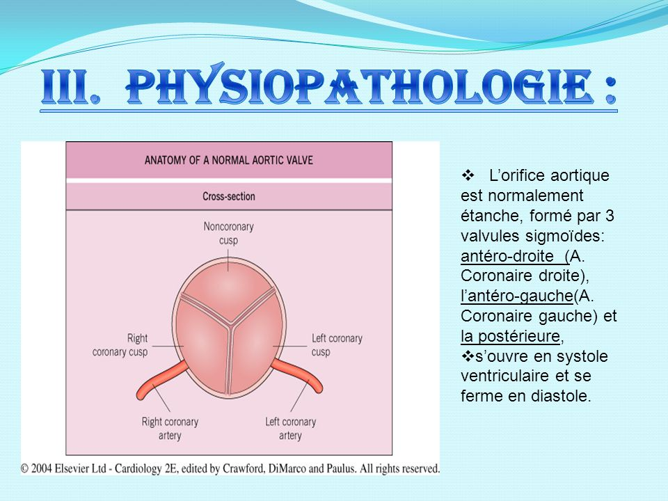 III. Physiopathologie :