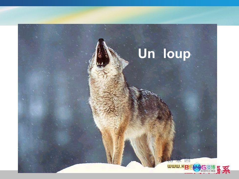 Un loup 应用外语系