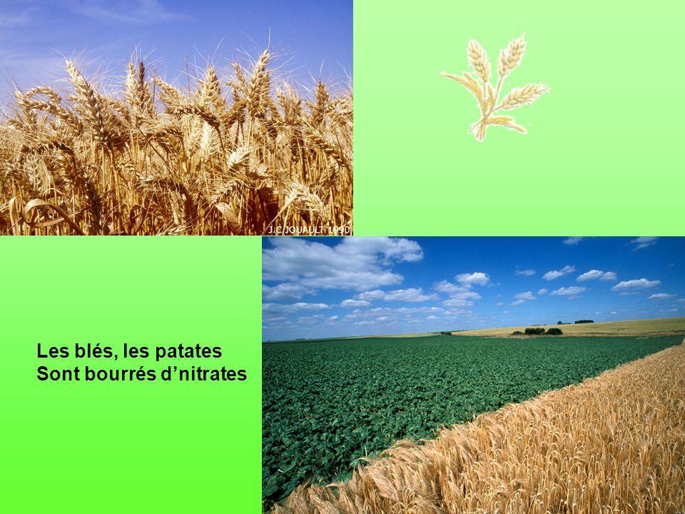 Les blés, les patates Sont bourrés d'nitrates
