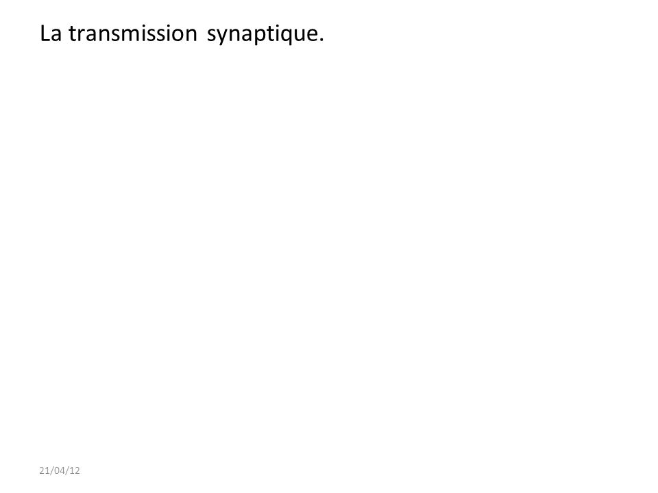La transmission synaptique.