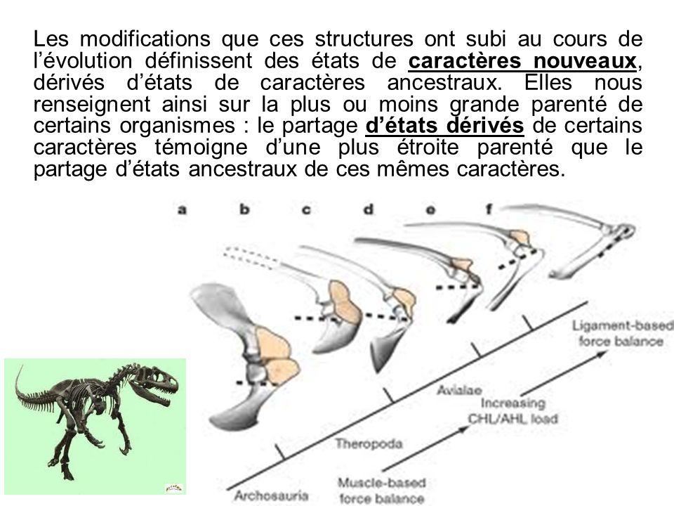 Les modifications que ces structures ont subi au cours de l'évolution définissent des états de caractères nouveaux, dérivés d'états de caractères ancestraux.
