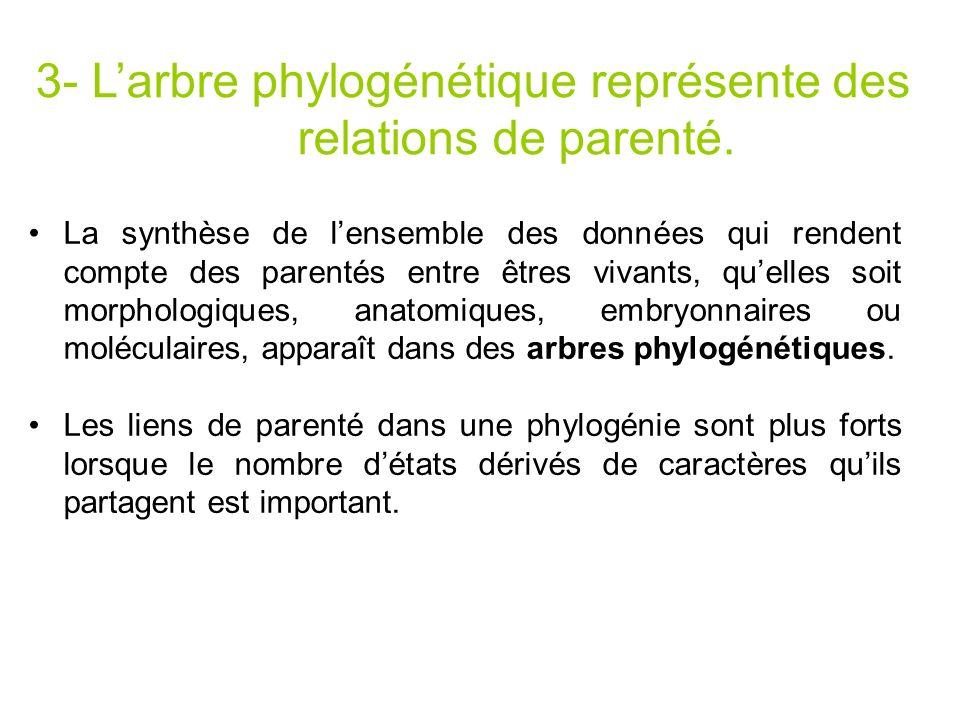 3- L'arbre phylogénétique représente des relations de parenté.