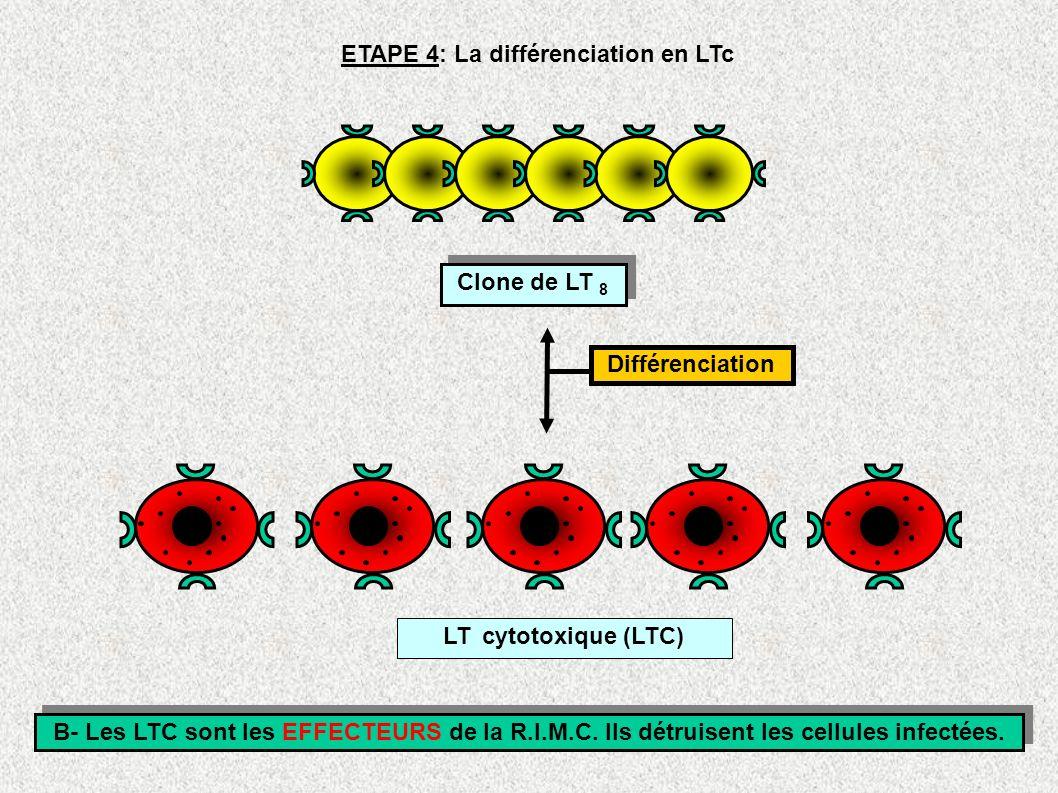 ETAPE 4: La différenciation en LTc