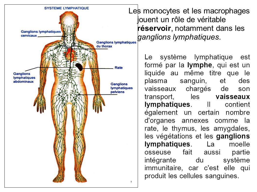 Les monocytes et les macrophages jouent un rôle de véritable réservoir, notamment dans les ganglions lymphatiques.